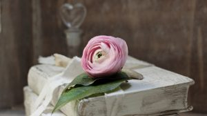 libro blanco con rosa rosa
